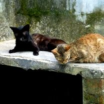 Street cats taking it easy